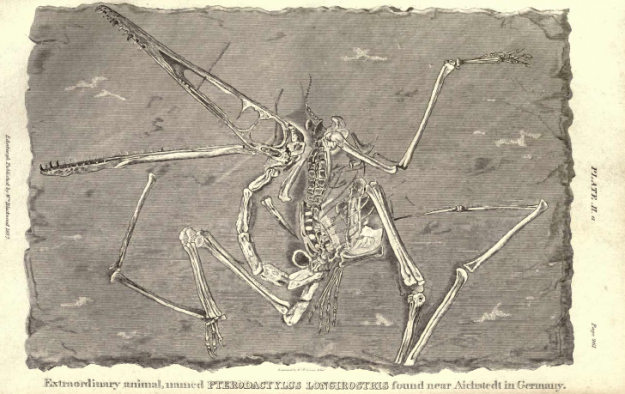 Plate II.a., Extraordinary Fossil Animal named Pterodactylus longirostrus, found near Aichstedt, in Germany.